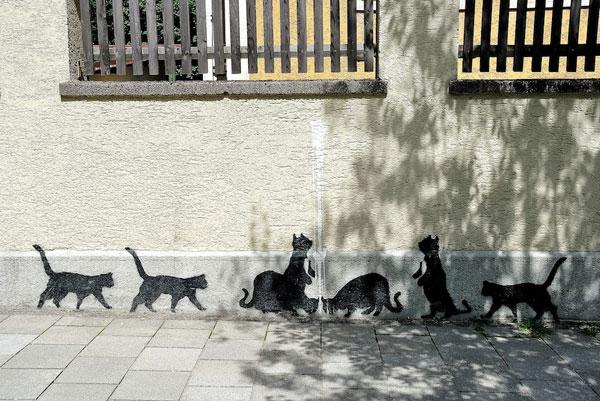 群猫街头涂鸦