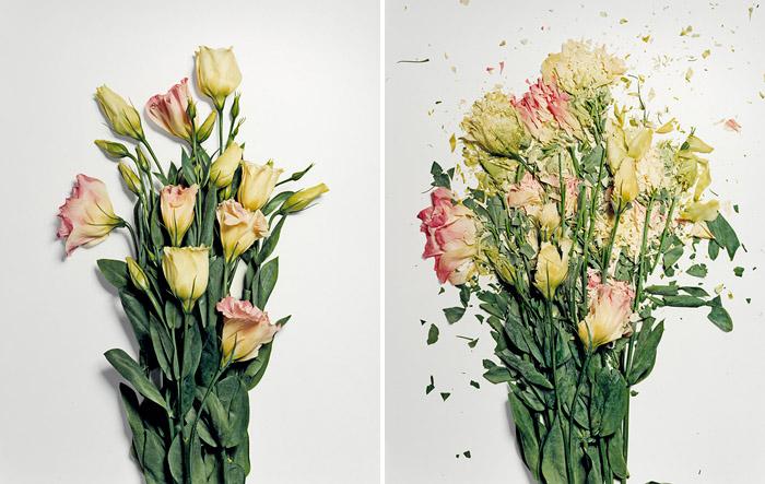 花朵被破坏之后