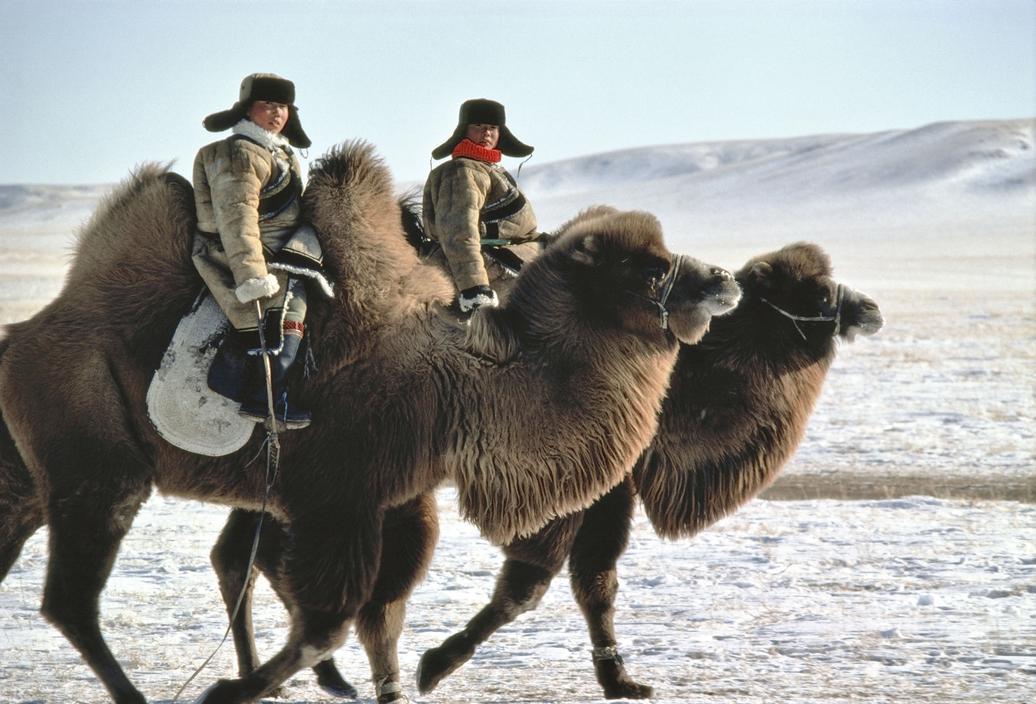 1982年,中国内蒙古自治区,骑着骆驼的男孩