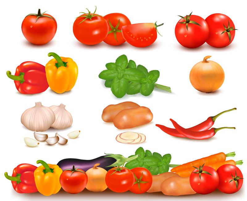 精美蔬菜矢量素材