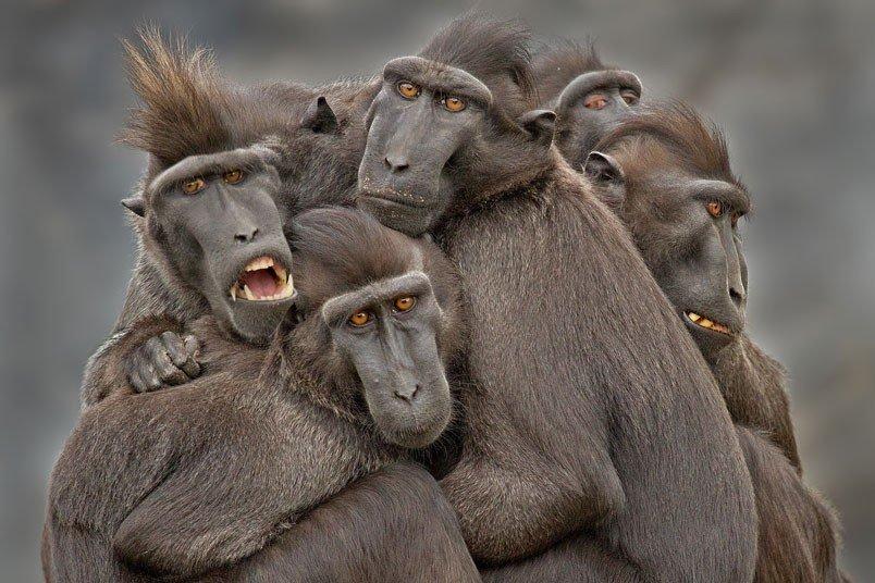 狒狒2013索尼世界摄影奖作品