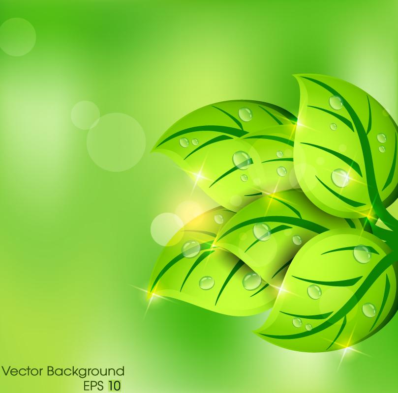 清新绿叶矢量素材
