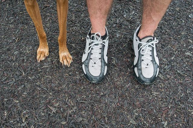 狗狗和人的创意摄影