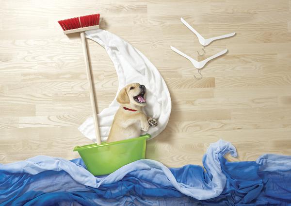 狗狗去历险