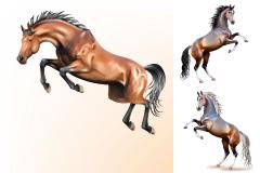 3款动态骏马插画矢量素材