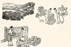 古代制茶工艺线描画矢量素材