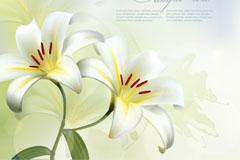 洁白百合花背景矢量素材