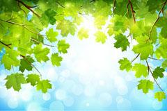 明媚阳光梧桐树背景矢量素材
