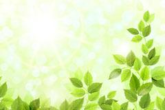 精美翠绿枝叶背景矢量素材