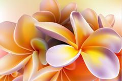 精美鸡蛋花背景矢量素材