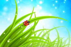 精美绿色草地背景矢量素材