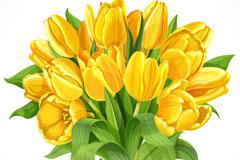 黄色郁金香花束矢量素材