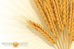 金黄麦穗背景矢量素材