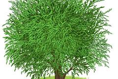 卡通繁茂树木矢量素材
