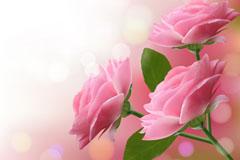 梦幻粉色玫瑰花矢量素材
