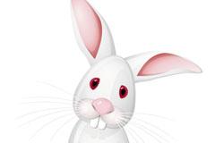 白色大耳兔矢量素材