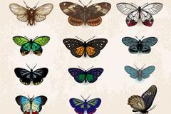 12款复古蝴蝶设计矢量素材