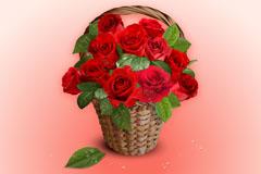 玫瑰花蓝背景矢量素材