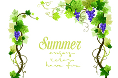 夏季葡萄藤边框矢量素材