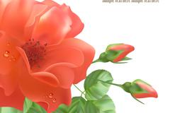 红色玫瑰花背景矢量素材