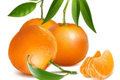 新鲜橘子设计矢量素材