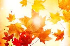 灿烂阳光秋叶背景矢量素材