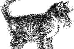 手绘猫咪设计矢量素材