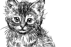 黑色手绘猫咪设计矢量素材