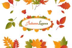 8款彩色秋叶设计矢量素材