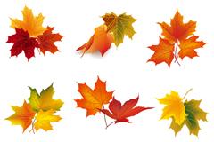 9款秋季树叶设计矢量素材