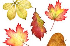 5款水彩秋叶设计矢量素材