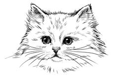 手绘白色波斯猫矢量素材