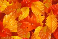 秋季缤纷落叶矢量素材