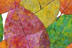 彩色秋叶卡片矢量素材