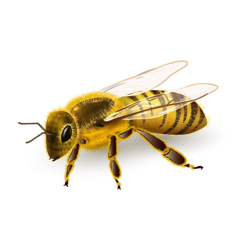 u5c0f u871c u8702 u5934 u9970 u56fe u7247 u76f8 u5173 u56fe u7247 u4e0b u8f7d honey bee clip art free honey bee clip art images free