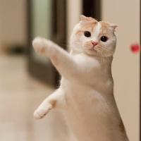 萌萌的猫猫可爱QQ头像