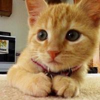 标志设计软件下载_萌萌的猫猫可爱QQ头像_QQ头像_懒人图库