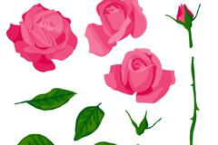 11款粉色玫瑰与叶子矢量素材