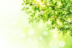 春季树木与阳光矢量图
