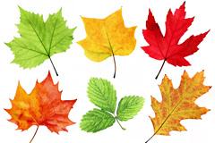 9种树叶高清图片下载