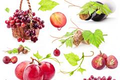 葡萄和葡萄酒高清图片下载