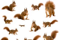 16种姿势可爱松鼠高清图片素材