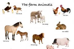15种农场常见家畜动物图片素材