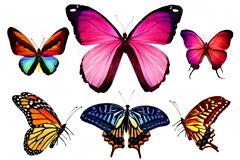 9种彩色蝴蝶高清图片素材