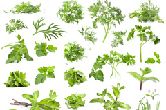 30种绿色菜叶高清图片