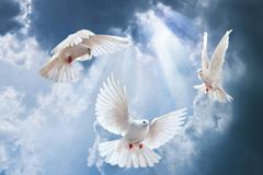 3只蓝天下的白鸽高清图片