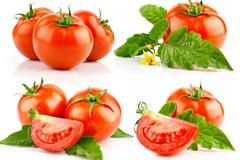 9组切开的西红柿高清图片