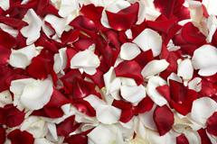 �t玫瑰�c白玫瑰花瓣高清�D片