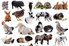 29种常见动物高清图片