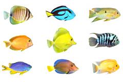 15种热带鱼高清图片